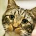 Ginx Cat <br> Redwood City, CA